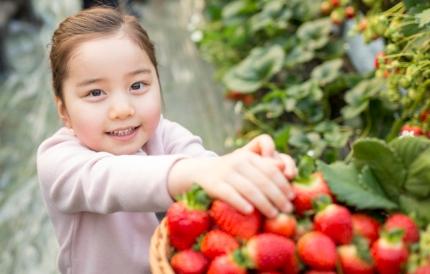 딸기를 잡고 있는 아이