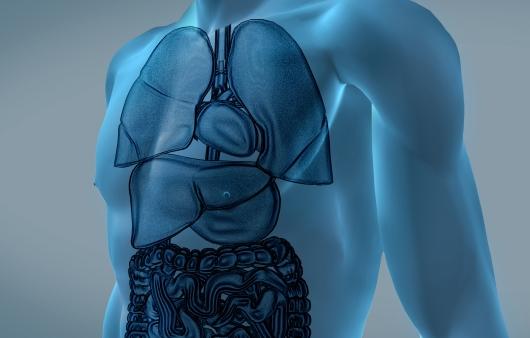 만성 신장질환, 전격성 간염에 효과적인 새 치료제 개발