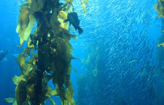 바다의 해조류