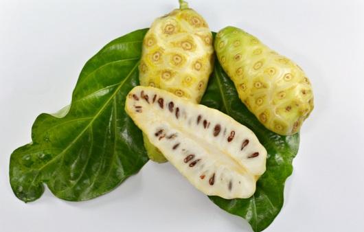 노니 열매