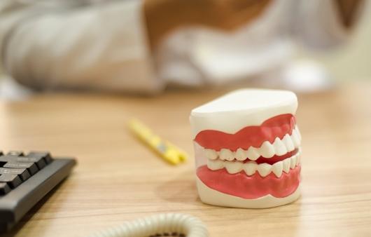 이빨 모형