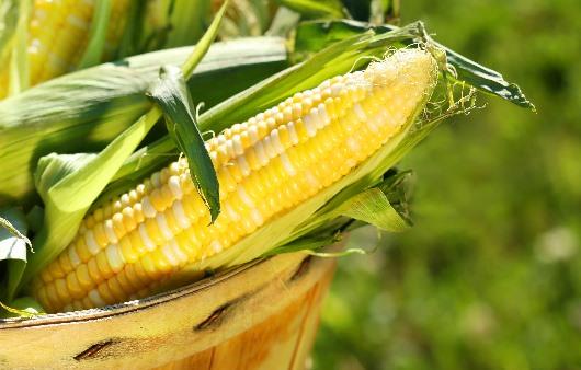 옥수수 수염 성분, 자외선 차단과 피부 트러블에 효과