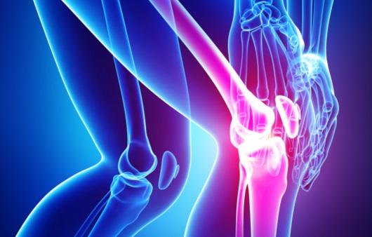 뼈와 관절
