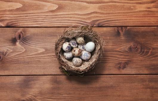 영양 만점 메추리알, 달걀과 차이는?