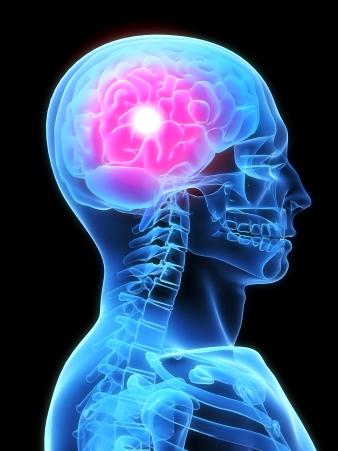 머리 속 뇌