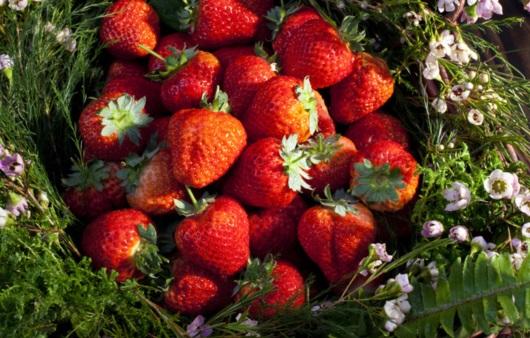 봄이 제철인 딸기
