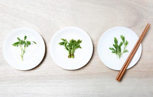 백세 건강의 해법, '식물'에서 답을 찾다
