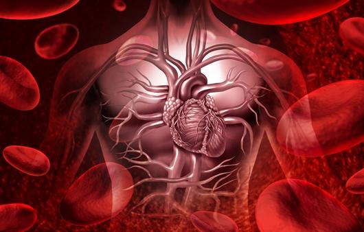 심장과 혈관