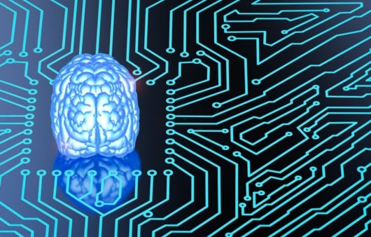 뇌와 신경