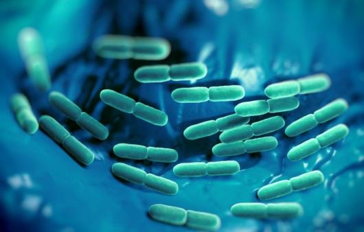 체내 유산균