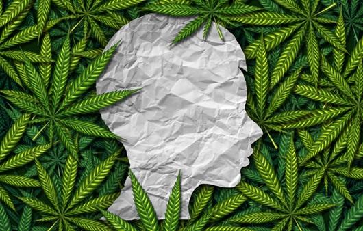 의료용 대마, 정신병 환자 뇌 기능을 재설정해